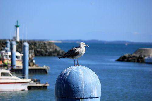 Ile d'Oléron : découvrez en images l'île où il fait bon vivre